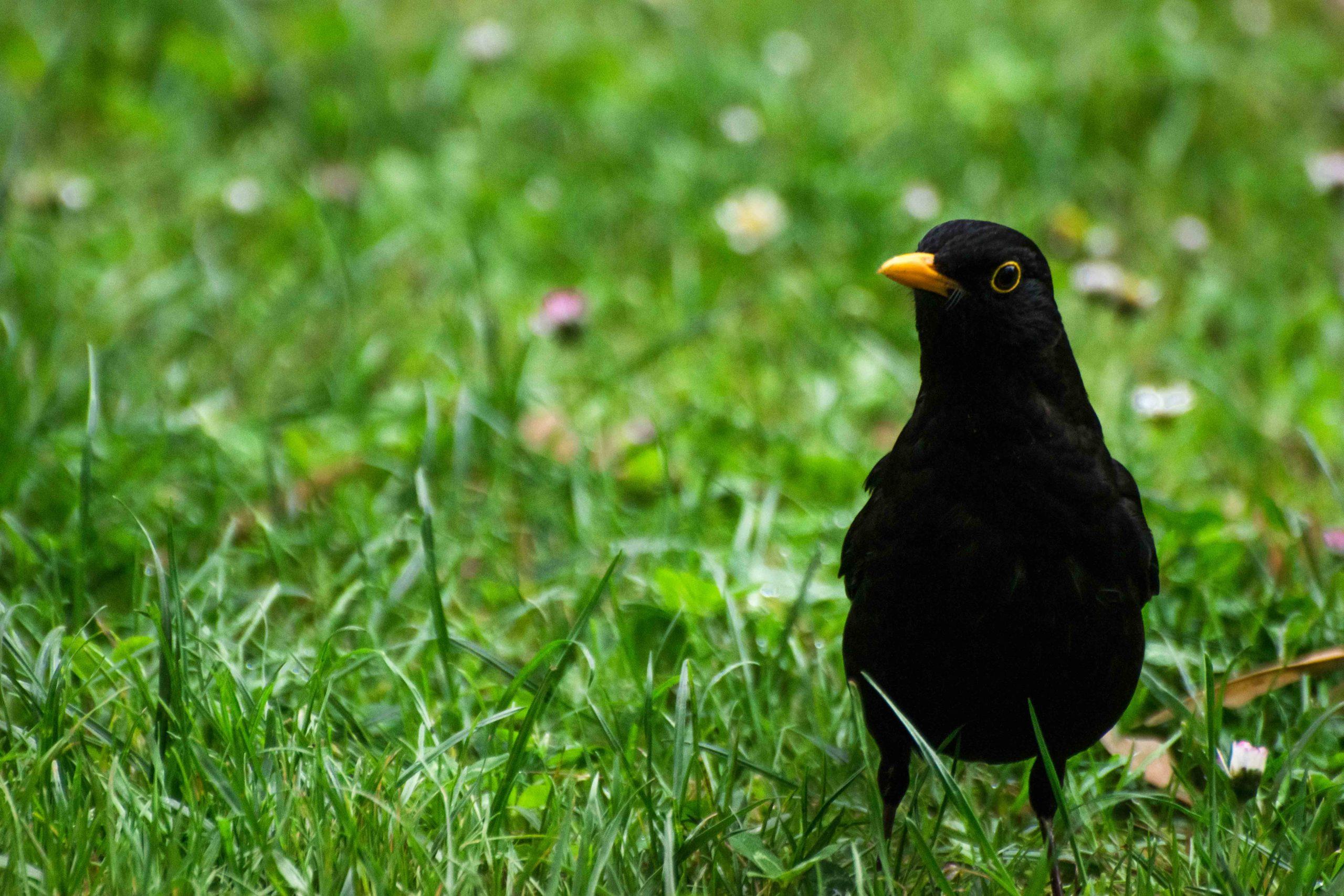 oiseaux jardin compans caffarelli